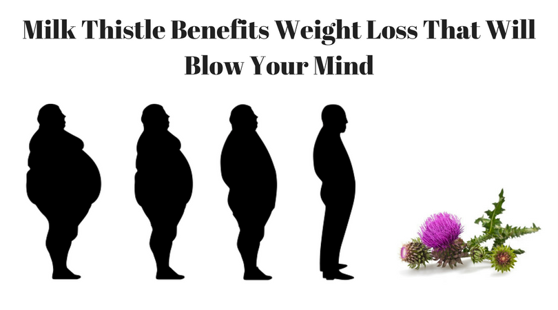 Milk thistle benefits weight loss