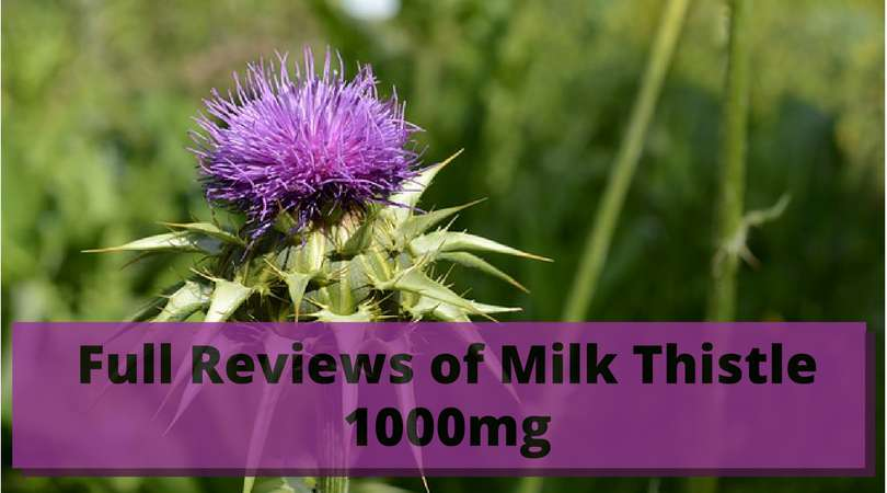 Full-Reviews-of-Milk-Thistle-1000mg